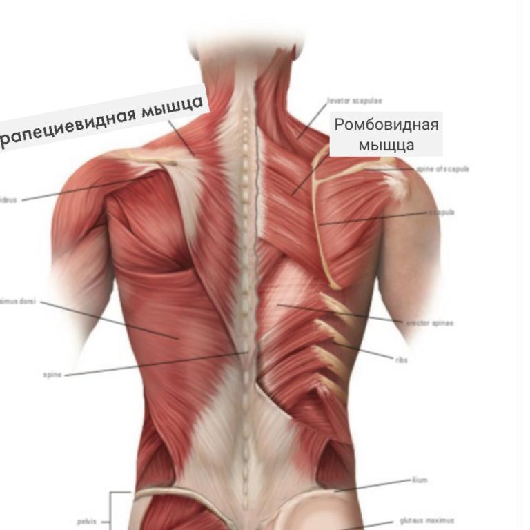 спина человека фото с описанием